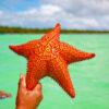 estrellas de mar, excursion Catamaran, estrella de mar